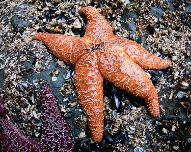Patrick Star again!
