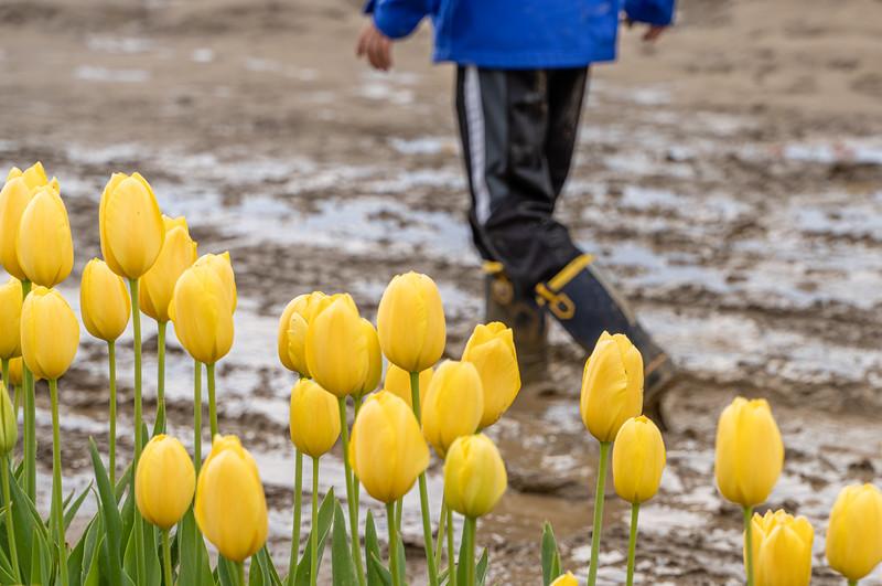 Tip Toe Through the Tulips?