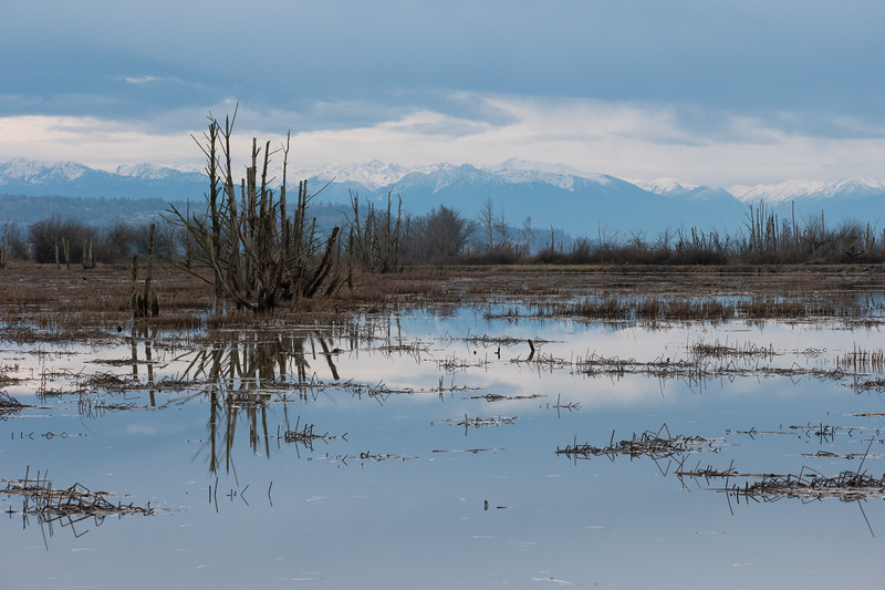 Wiley Slough