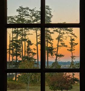 Sunset & Pines, San Juan Island, 2020