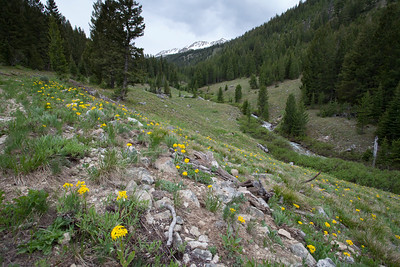 Eureka Gulch is one of the best flower hikes in the Sawtooths.