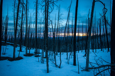 Sunrise on the Lost River Range seen through a filter of torched lodgepole pine forest.
