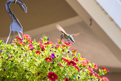 JordanaTorgesonPhotography-0106
