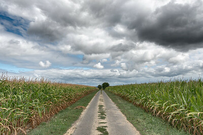 Country Road - La Croix-Avranchin, France - August 14, 2018