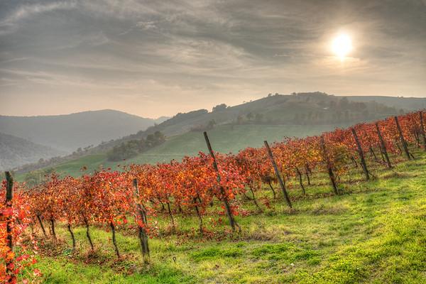 Vineyard - Quattro Castella, Reggio Emilia, Italy - October 31, 2020