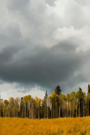 Colorado Fall Foliage 012 | Wall Art Resource