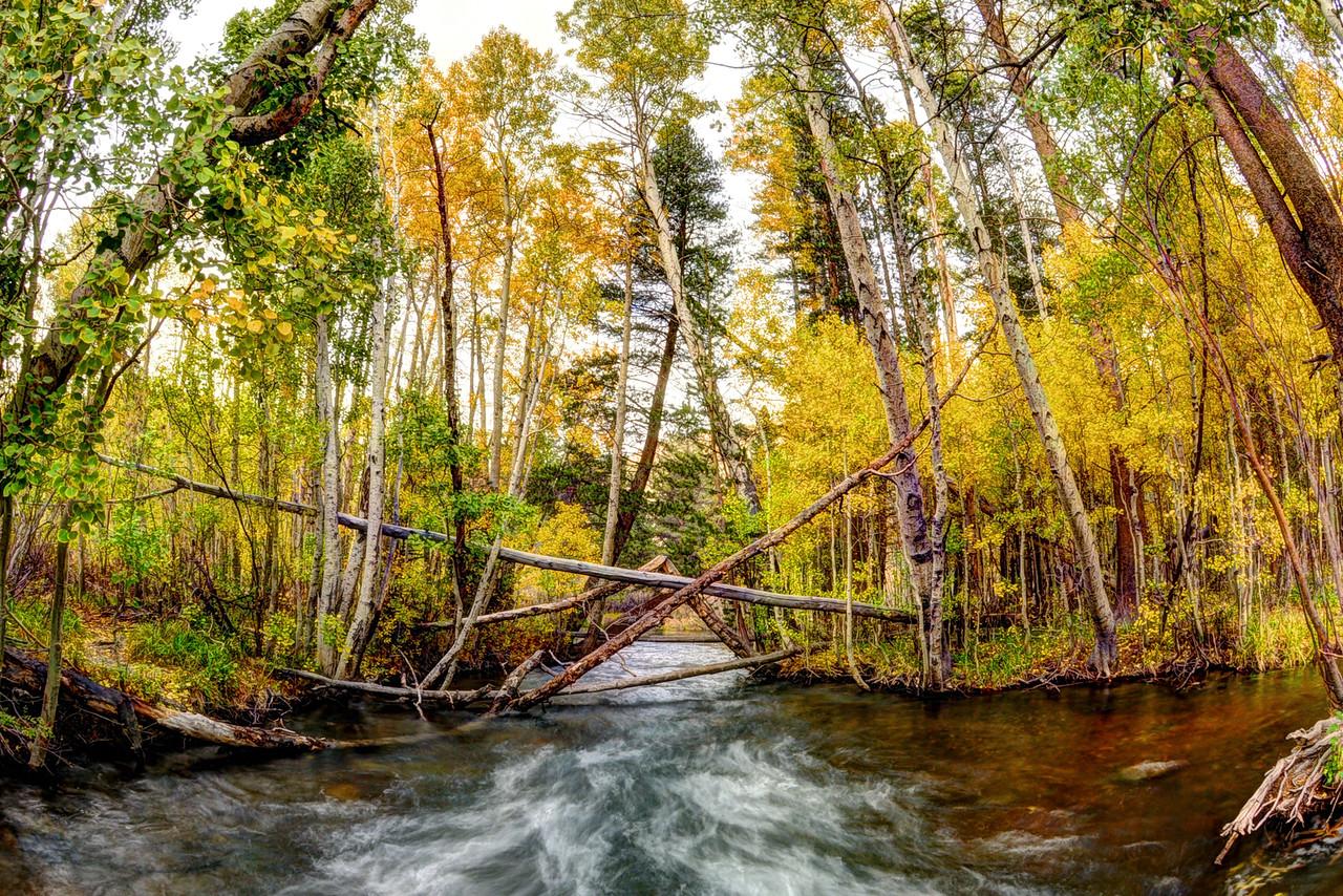 Reverse Creek, eastern Sierra.