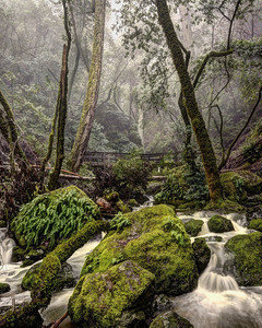 Cataract Falls,  Mt. Tamalpais.