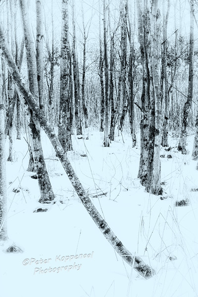 Trees & Grass in Snow