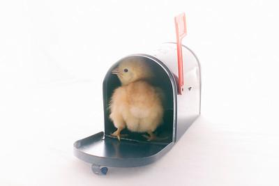 """Cheep Postage"""