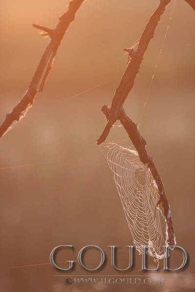 Sunrise Web