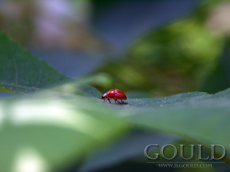 Ladybugs Long Journey