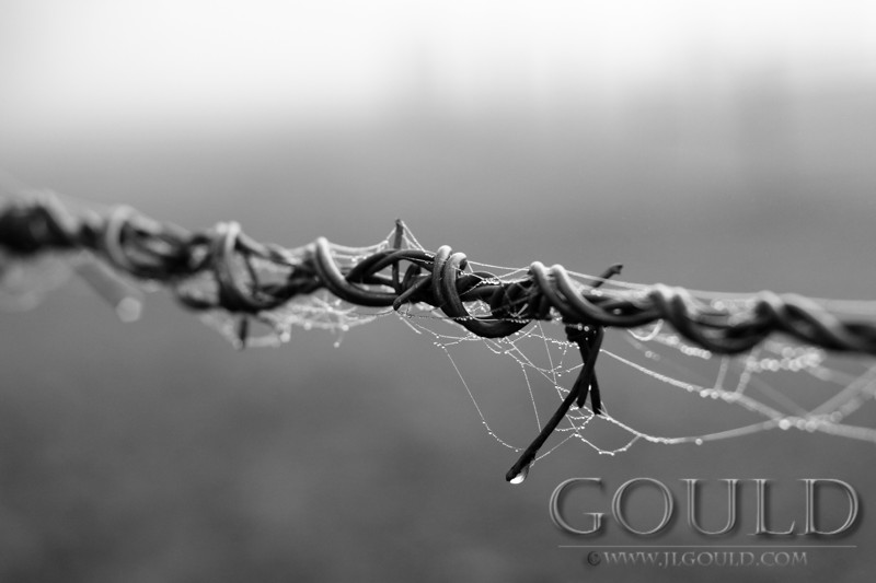 Barbed Web