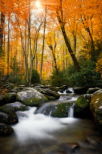 Flowing stream in the autumn