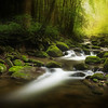 """Moody Morning along the Roaring Fork. Smoky Mountains. Lots more <a style=""""color: #aaccee"""" href=""""http://williambritten.com/"""">Smoky Mountains Photos</a> and info over on my blog."""