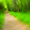 """Hand-held photo taken with long exposure while rotating camera. Lots more <a style=""""color: #aaccee"""" href=""""http://williambritten.com/"""">Smoky Mountains Photos</a> and info over on my blog."""
