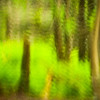 """Smoky Mountains Woodland Impression. Lots more <a style=""""color: #aaccee"""" href=""""http://williambritten.com/"""">Smoky Mountains Photos</a> and info over on my blog."""
