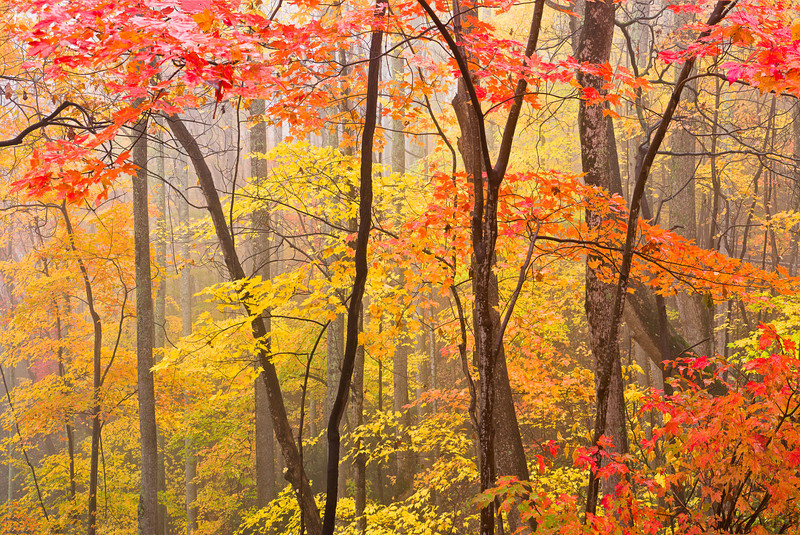 Heart of Autumn.  Near Cataloochee in the Smoky Mountains. Lots more Smoky Mountains Photos and info over on my blog.