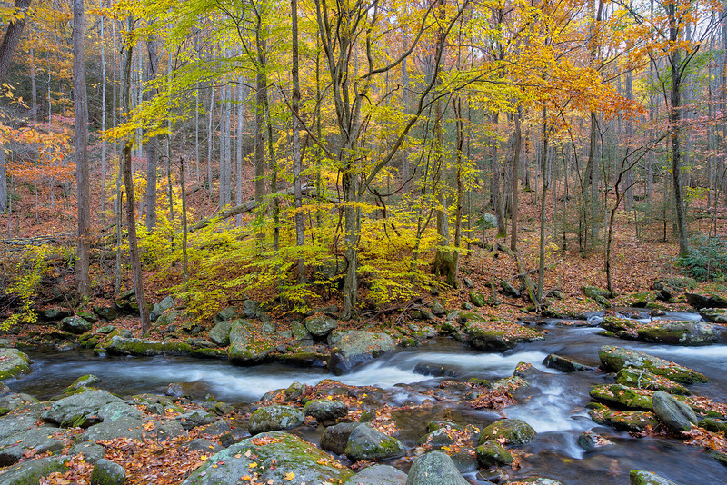 "Stillness in Motion So much quiet beauty in the Great Smoky Mountains National Park. Lots more <a style=""color: #aaccee"" href=""http://williambritten.com/"">Smoky Mountains Photos</a> and info over on my blog."
