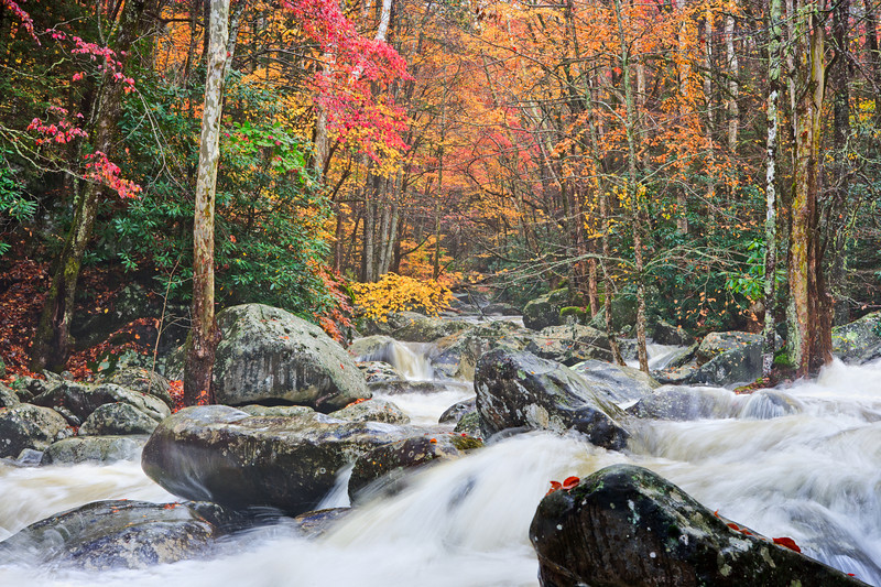 "Wild Autumn Rain-swollen creek in the Greenbrier section of the Great Smoky Mountains. Lots more <a style=""color: #aaccee"" href=""http://williambritten.com/"">Smoky Mountains Photos</a> and info over on my blog."