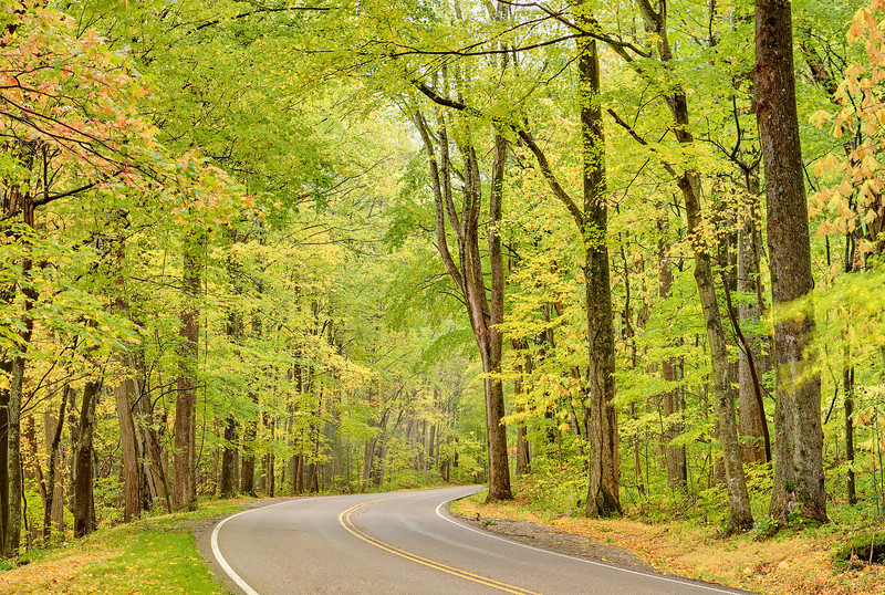 """Gentle Journey An amazing canopy of fall foliage over a Smoky Mountain roadway. Great Smoky Mountains National Park. Lots more <a style=""""color: #aaccee"""" href=""""http://williambritten.com/"""">Smoky Mountains Photos</a> and info over on my blog."""