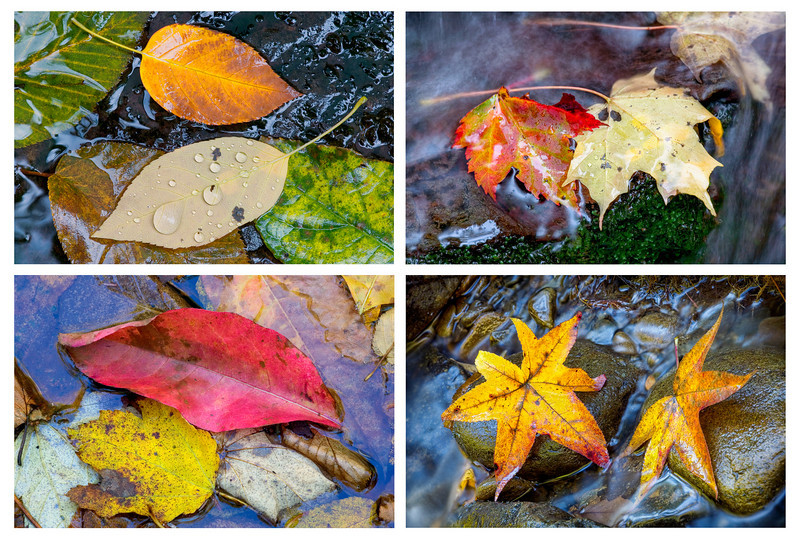 "Four Leaves in a Stream This is a set of four images that I mount on frameless boards.  Probably my signature item. Great Smoky Mountains National Park. Lots more <a style=""color: #aaccee"" href=""http://williambritten.com/"">Smoky Mountains Photos</a> and info over on my blog."