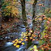 "Creekside Sweet gum My most popular image, year after year. Pairs well with Midnight Hole as a set of verticals. Great Smoky Mountains National Park Lots more <a style=""color: #aaccee"" href=""http://williambritten.com/"">Smoky Mountains Photos</a> and info over on my blog."