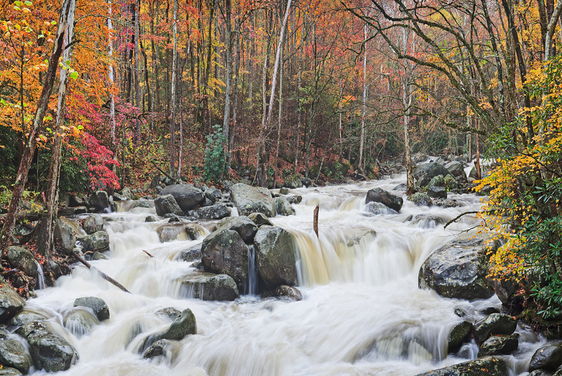 "Wild Autumn.  Greenbrier section of the Smoky Mountains. Lots more <a style=""color: #aaccee"" href=""http://williambritten.com/"">Smoky Mountains Photos</a> and info over on my blog."