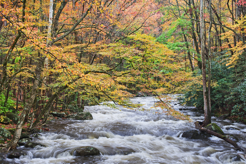 """Color Cascade Autumn colors and flowing water in the Greenbrier section of the Great Smoky Mountains National Park. Lots more <a style=""""color: #aaccee"""" href=""""http://williambritten.com/"""">Smoky Mountains Photos</a> and info over on my blog."""