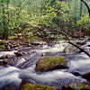 """Dogwood Arch Dogwood tree along the Middle Prong in the Tremont section of the Great Smoky Mountains National Park. Lots more <a style=""""color: #aaccee"""" href=""""http://williambritten.com/"""">Smoky Mountains Photos</a> and info over on my blog."""