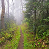 "Peace in Wild Places Taken along the Appalachian Trail in the Smoky Mountains near Clingmans Dome. Lots more <a style=""color: #aaccee"" href=""http://williambritten.com/"">Smoky Mountains Photos</a> and info over on my blog."