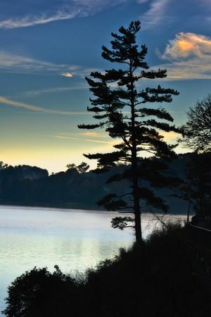 Lake Pine Tree Silouhette