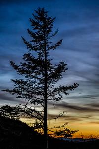 Waterock Knob Tree Silouhette