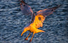 Cape Cod - Sojourn - D1-C7-0167 - 72 ppi