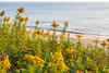 Cape Cod - Sojourn - D4-C1-0018 - 72 ppi