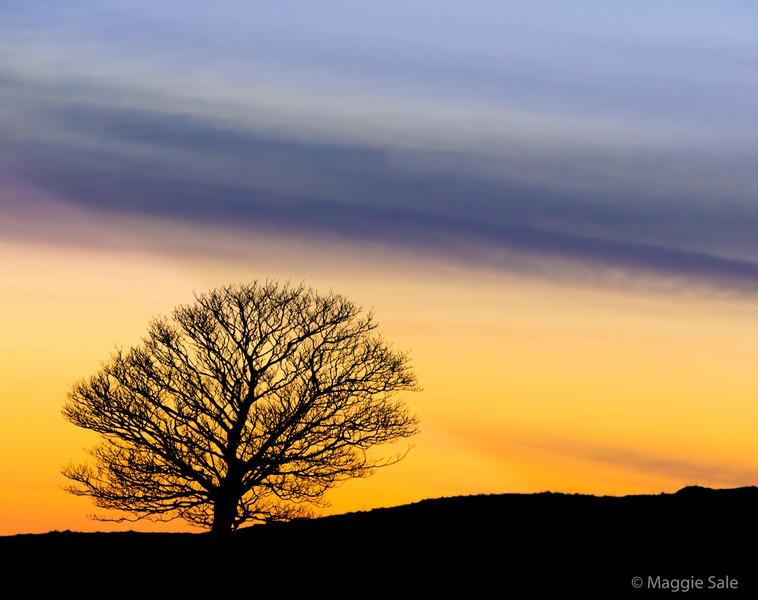 Tree at Sunset, Cumbria, England