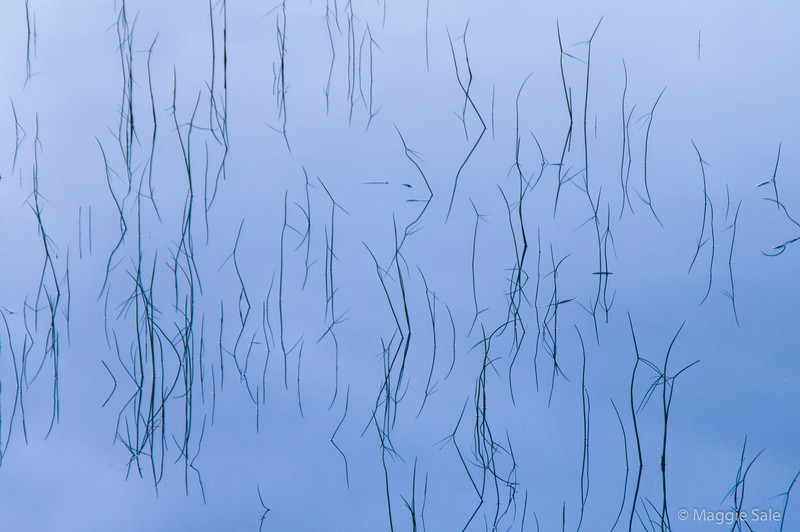 Reeds at Dawn,  Georgian Bay