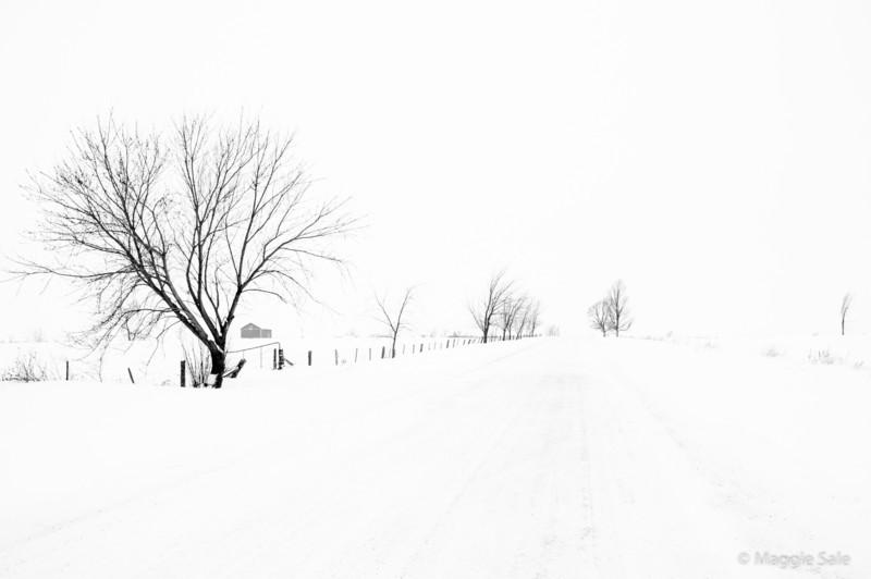 Snowy Road, Caledon, Ontario