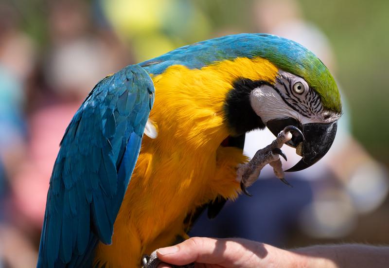 Woburn Safari Park (2021)