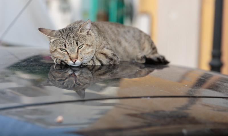 Cat in Sorrento, Italy