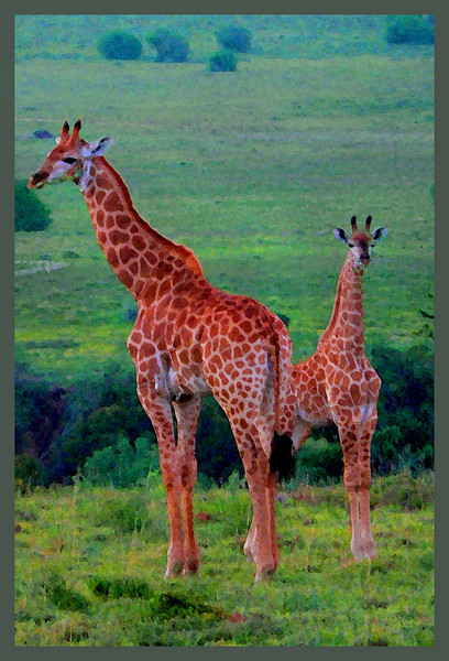 Giraffe, the poster