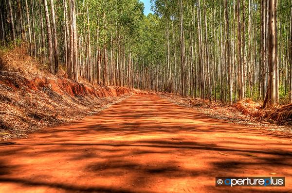 A Dirt Road Somewhere