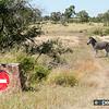 Zebra No-Entry