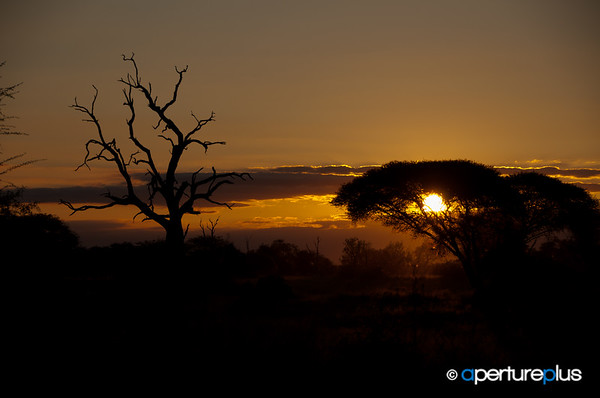 Sunset In The Kruger National Park