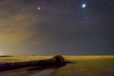 Long Palmetto Tree Under Stars