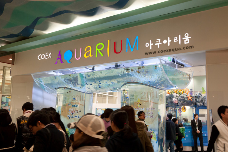 The aquarium inside the COEX Mall.  I did not go in as it looked even busier than the National Aqurium in Baltimore.