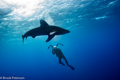 Photographing a Shark