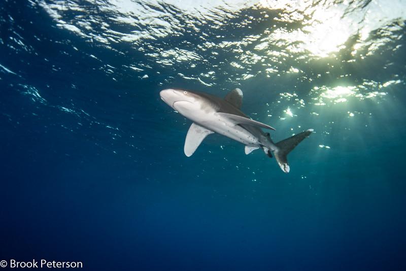 Shark Under the Sun
