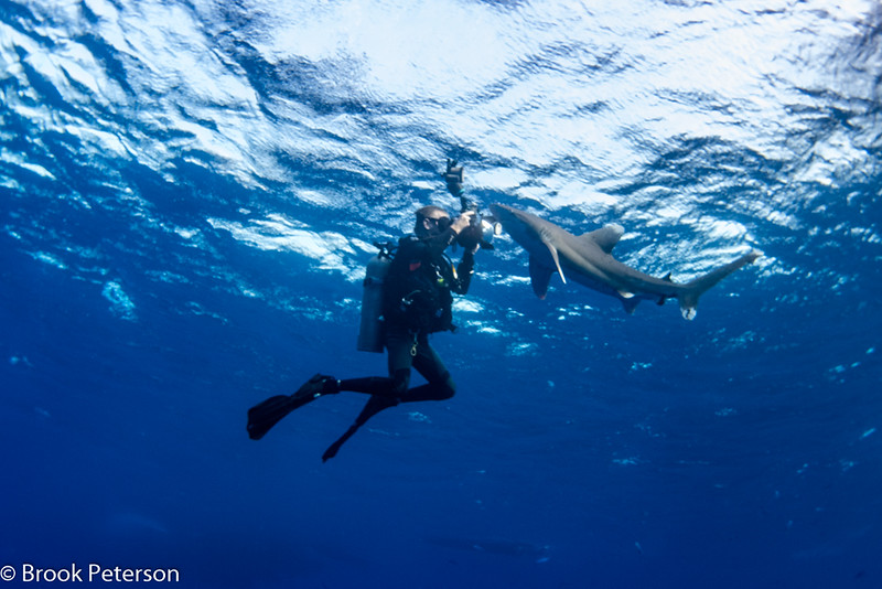 Diver Photographing Shark