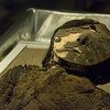 The Chinchorro mummies predate Egyptian mummies by 2,000 years.